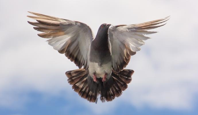 Имейлът - пощенският гълъб в 21 век